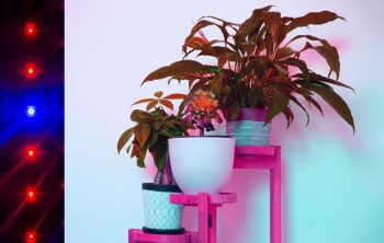 3 Tier Plant Stand With Grow Lights