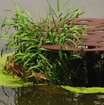 Aerating Water For Plants