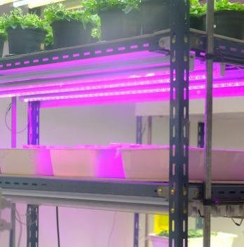 Best Light Temperature For Growing Plants