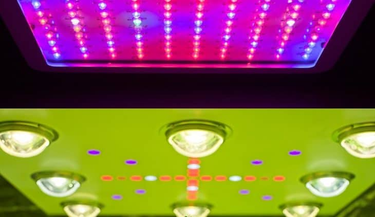 COB vs SMD LED For Growing