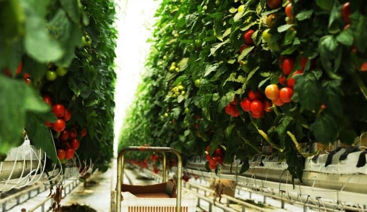Easiest Plants To Grow Hydroponically