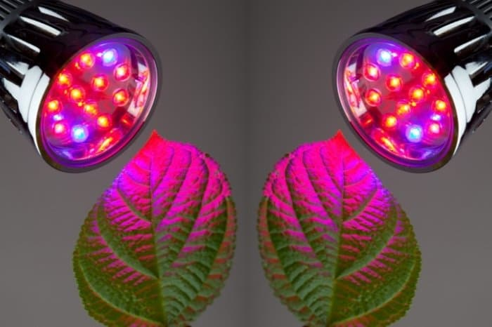 How Far Should LED Grow Light Be From Plants
