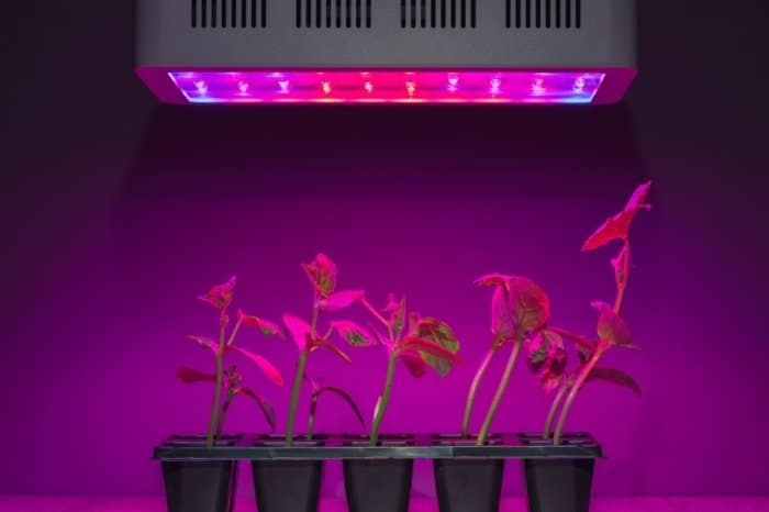 Plants To Grow With Mars LED