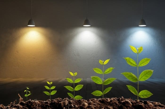 The Best Grow Light Color Temperature For Growing Plants