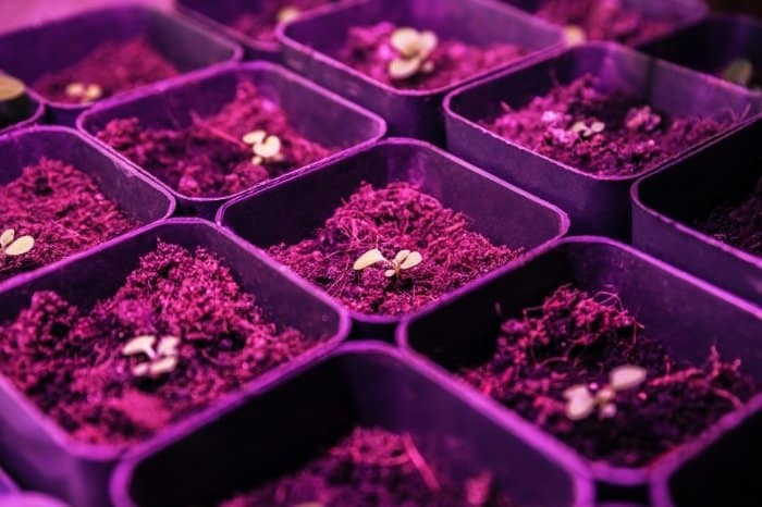 What Is A Grow Light Color Temp