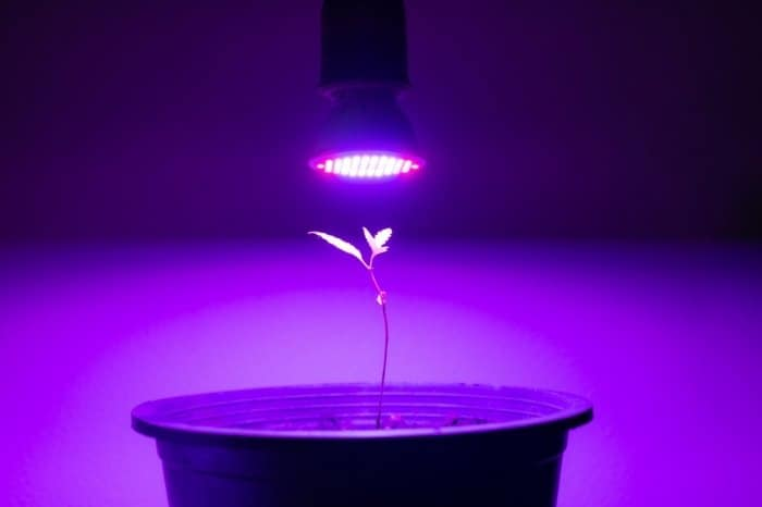 What Is A Grow Light
