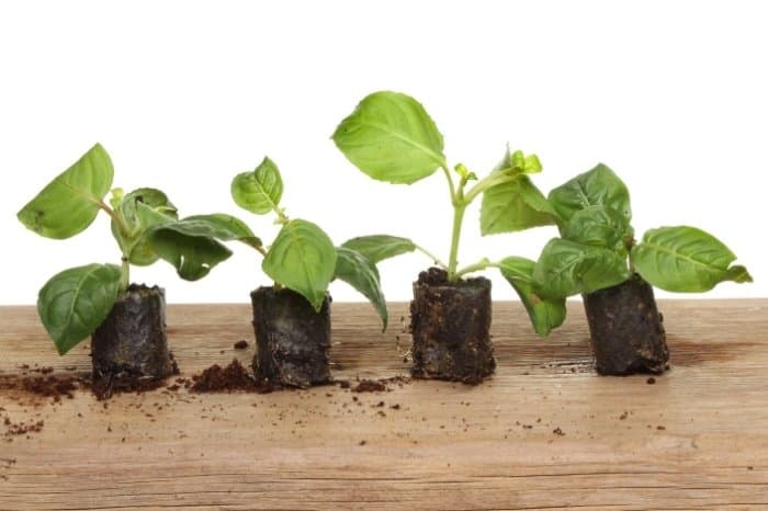 How To Use Rapid Rooters - Germination