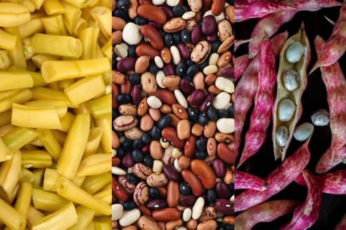 Types Of Common Beans