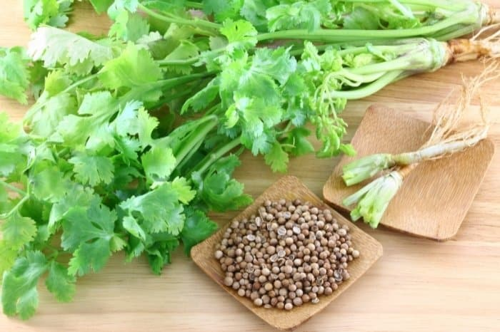 Health Benefits Of Cilantro Seeds