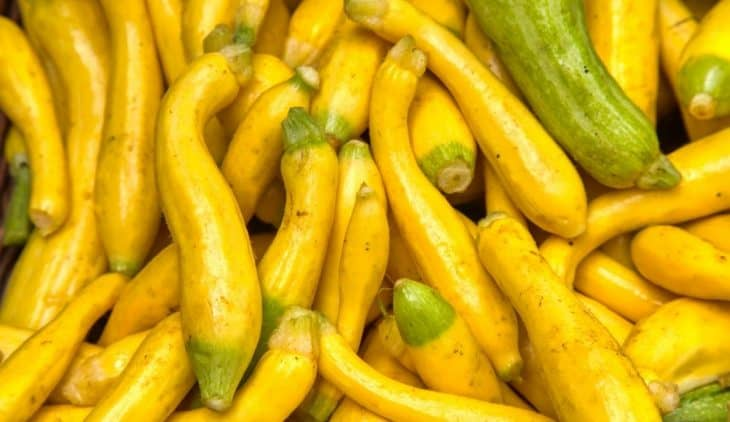 Growing Crooked Neck Squash