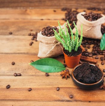 List Of Vegetables That Like Coffee Grounds